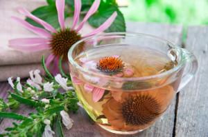 Ехинацея – чуден лек при настинки